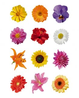 Herma stickers Decor colourful gerberas (3)