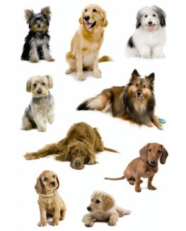 Herma stickers Decor dog photos (3)