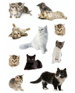 Herma stickers Decor cat photos (3)